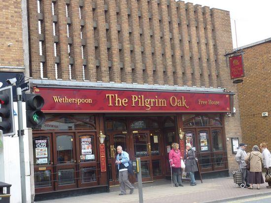 Pilgrim Oak